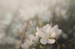 Blomma i blom i vår royaltyfri fotografi