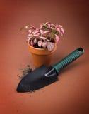 Blomma i blommakruka Arkivfoton