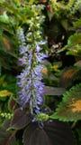 Blomma i Cameron Highlands arkivbilder