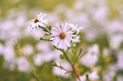 Blomma i den rosa trädgården Royaltyfria Bilder