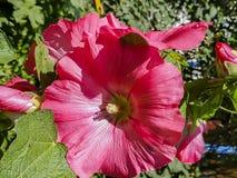Blomma i den trädgårds- bakgrundsbilden fotografering för bildbyråer