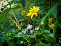 Blomma i djungeln arkivfoto