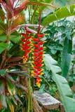 Blomma i djungeln royaltyfri bild