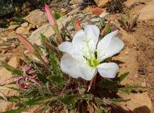 Blomma i efterrätten arkivfoto