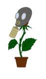 Blomma i en gasmask Royaltyfri Bild