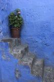 Blomma i en kruka på trappan av Monasterio de Santa Catalina Royaltyfri Foto