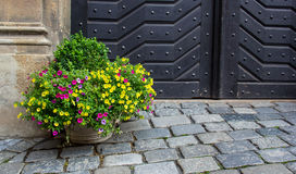 Blomma i en kruka på trottoaren Royaltyfria Foton