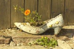 Blomma i en shoe_2 royaltyfria bilder