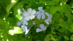 Blomma i en trädgård arkivbild