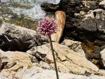 Blomma i en vagga, nära havet Nerezine Kroatien Arkivfoto