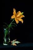 Blomma i en vas Arkivbilder