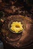 Blomma i en vase Arkivfoto