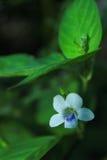 Blomma i ett mörkt ställe Arkivfoton