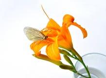 Blomma i exponeringsglas och sätta sig fjäril Arkivbild