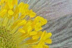 Blomma i fruktgodis Arkivfoto