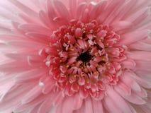 Blomma i gård Royaltyfri Bild