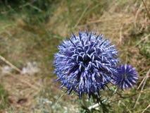 Blomma i gräset Arkivfoto