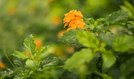 Blomma i gräsplan Arkivfoto