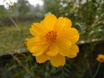 Blomma i gul färg Arkivfoto