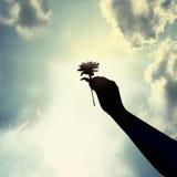 Blomma i handen som ger förälskelse Arkivbilder