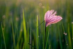 Blomma i irländarefält Arkivfoton