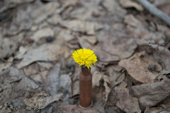 Blomma i kassett-fall Royaltyfri Bild