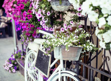 Blomma i korg av tappningcykeln på tappningträhusväggen, slut för sommargatakafé upp Europa Royaltyfri Fotografi
