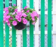 Blomma i kruka på trästaket Royaltyfria Bilder