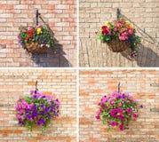 Blomma i krukan, uppsättningen av de fyra bilderna Arkivbilder