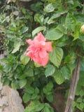 blomma i min trädgård royaltyfria foton