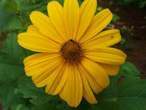 blomma i min trädgård royaltyfri foto