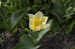 Blomma i natur Fotografering för Bildbyråer