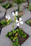 Blomma i parkeringsplatsen Arkivfoto