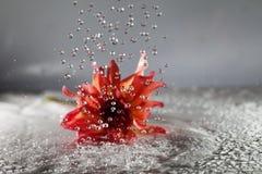 Blomma i regn Fotografering för Bildbyråer