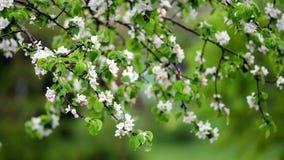 Blomma i regn lager videofilmer