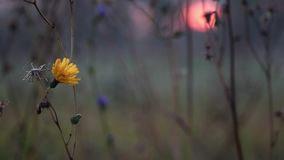 Blomma i sätta in arkivfilmer