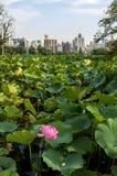 Blomma i sjön Arkivbild