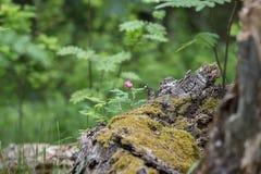 Blomma i skogen Fotografering för Bildbyråer