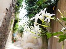Blomma i smal forntida gata croatia Nerezine Royaltyfri Bild