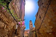 Blomma i smal sikt för Dubrovnik stengata royaltyfri bild