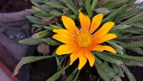 Blomma i smutsen Royaltyfri Fotografi