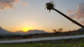 Blomma i solnedgång Arkivfoto