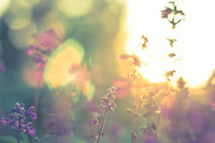 Blomma i solnedgången Arkivbild