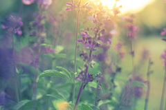 Blomma i solnedgången Royaltyfria Foton