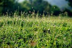 Blomma i soluppgångtid Arkivfoton