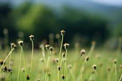 Blomma i soluppgångtid Arkivfoto