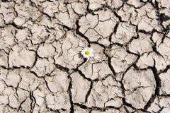 Blomma i sprucken jord Royaltyfri Fotografi