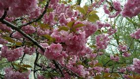 Blomma i staden arkivfoton