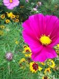 Blomma i sunen Royaltyfria Bilder