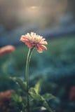 Blomma i sunen Arkivbilder